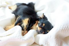 Dog want to sleep. Stock Photo