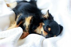 Dog want to sleep. Stock Photography