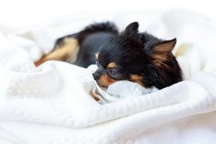 Dog want to sleep. Royalty Free Stock Photo