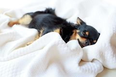 Dog want to sleep. Stock Photos