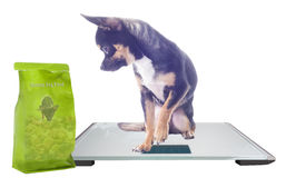 Dog on digital modern scale with health food  Stock Image