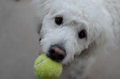 Dog wanting to play Stock Image