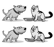 The dog wants to eat cat food. Royalty Free Stock Image