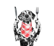 Dog wants to eat and hold knife and fork. Isolated on white stock photo