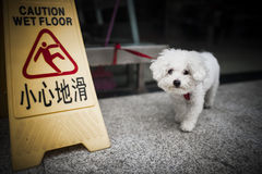 Dog and warning,China. Dog and Warning in Sichuan, China Royalty Free Stock Photography
