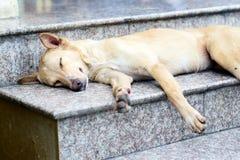 The dog Royalty Free Stock Image