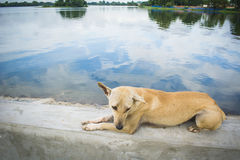 Dog was sitting by the lake stock photos