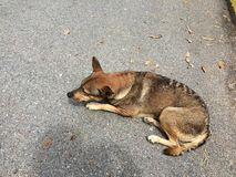The dog was sleeping on the floor Stock Photography