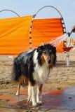Dog wash royalty free stock photo