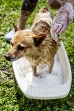 Dog wash Royalty Free Stock Photography