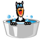 Dog is washed in basin Royalty Free Stock Photo