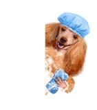 Dog washes Stock Photos