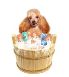 Dog washes Royalty Free Stock Photography