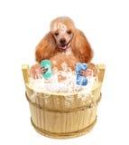 Dog washes Royalty Free Stock Photography