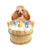 Dog washes Stock Image