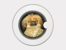 Dog in washing machine Stock Photography