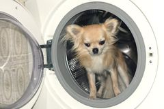 A dog in washing machine Royalty Free Stock Photo