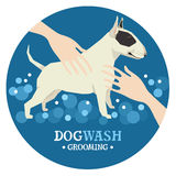 Dog washing Pet Grooming Bull terrier Design label Stock Photos