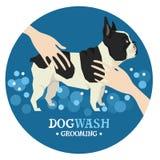 Dog washing Pet Grooming French Bulldog Design label. Set stock illustration