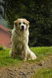 Dog. The dog watched me while I was on the road photographing the birds of the place Royalty Free Stock Photography