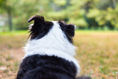 Dog watches back yard in autumn Stock Photos