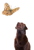 Dog watches Butterfly Stock Images