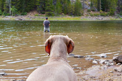 Dog Watches Fisherman Royalty Free Stock Image