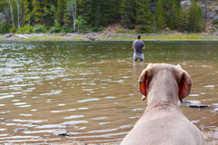 Dog Watches Fisherman Stock Photography