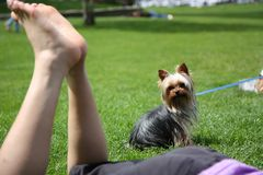 A dog watches a woman rest. A dog watches a woman as she relaxes on the grass Royalty Free Stock Images