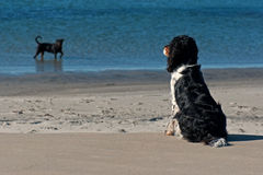 Dog watching bather dog
