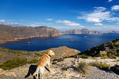 Dog watching the bay of Cartagena, Murcia, Spain royalty free stock photography