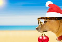 Dog watching the beach on summer christmas holidays. Chihuahua dog with santa claus hat at the beach and ocean wearing funny sunglasses and red hat  on summer Royalty Free Stock Images