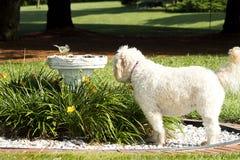 Dog Watching Bird Stock Photo