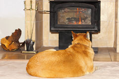 Dog Watching the Fire Stock Photos