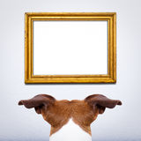 Dog watching a frame Stock Images