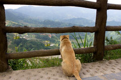 Dog watching gondola Royalty Free Stock Images