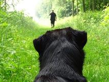 Dog watching man walking in forest