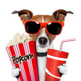 Dog watching a movie. With popcorn and coke Royalty Free Stock Images