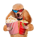 Dog watching a movie. Stock Image