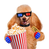 Dog watching a movie. Isolated on white Stock Photography