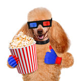 Dog watching a movie. Isolated on white Royalty Free Stock Photos