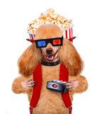 Dog watching a movie Royalty Free Stock Photography