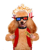 Dog watching a movie Stock Photo