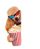 Dog watching a movie. The white banners Stock Photo