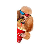 Dog watching a movie. Royalty Free Stock Photos