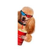 Dog watching a movie. Royalty Free Stock Image