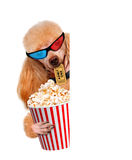 Dog watching a movie. Stock Photos