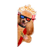Dog watching a movie Stock Photography