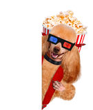 Dog watching a movie Stock Photos