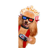 Dog watching a movie Royalty Free Stock Image